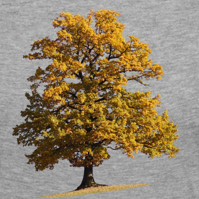 Herbst Herbstlaub Herbstbaum autumn