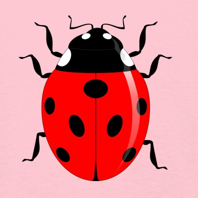 Insekt Marienkäfer Glück