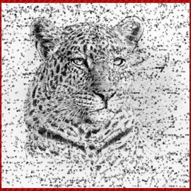 Tiger (Raubtier)