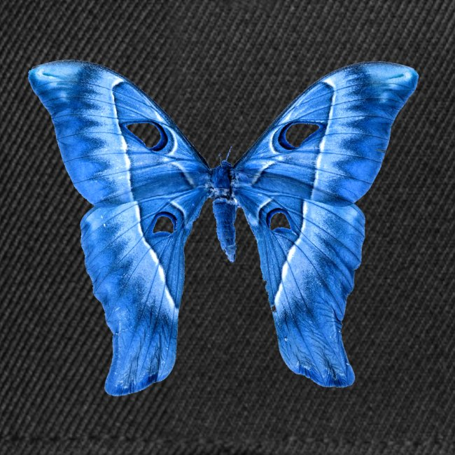 Herkules Falter Blau