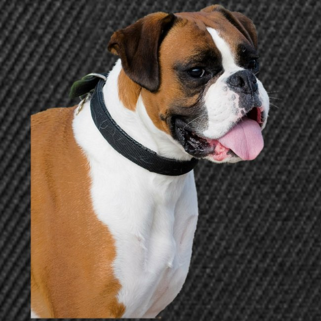 boxer hund png isolated boxer dog animal portrait