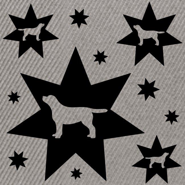 Sterne Labrador