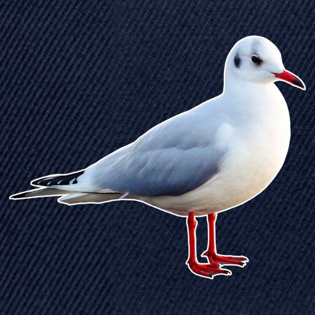 Möwe Vogel Natur Seagull Gull Tier
