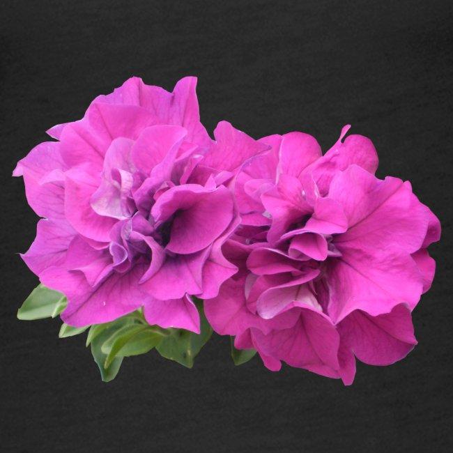 Pelargonie Geranie Blume pink