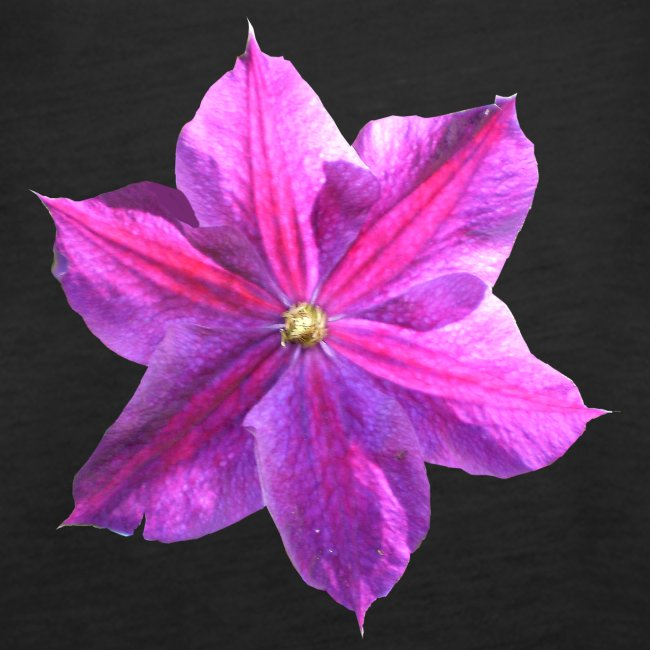 Clematis lila Sommerblume