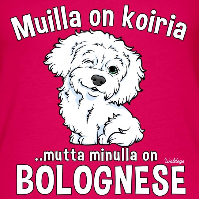 Bolognese Koiria