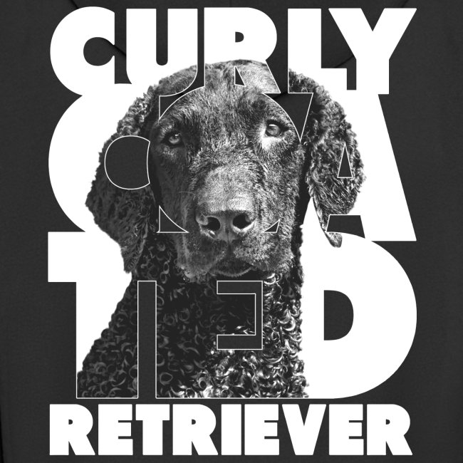 Curly Coated Retriever I