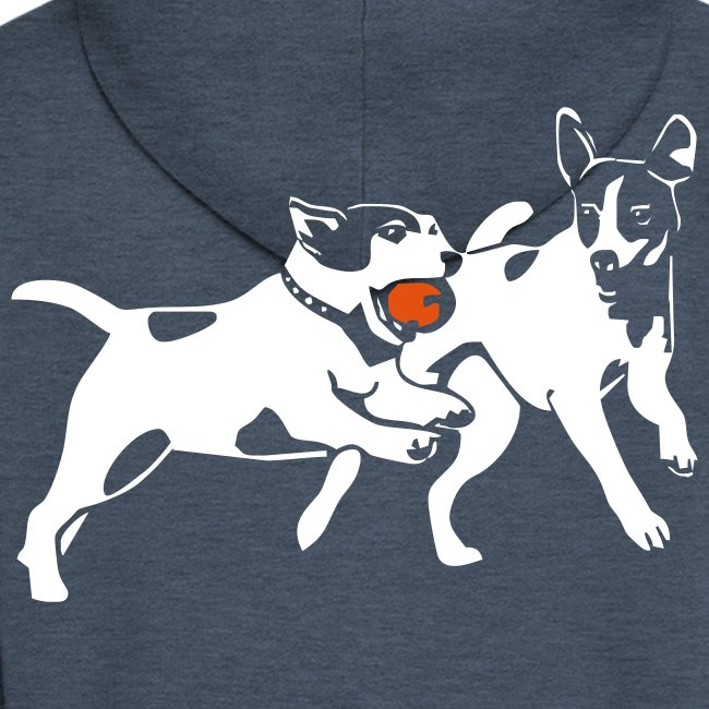 Playing Jack Russell terriers
