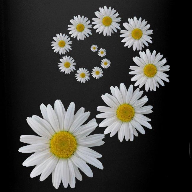 Margeriten Blume, Blumen, Blüte, floral, blumig