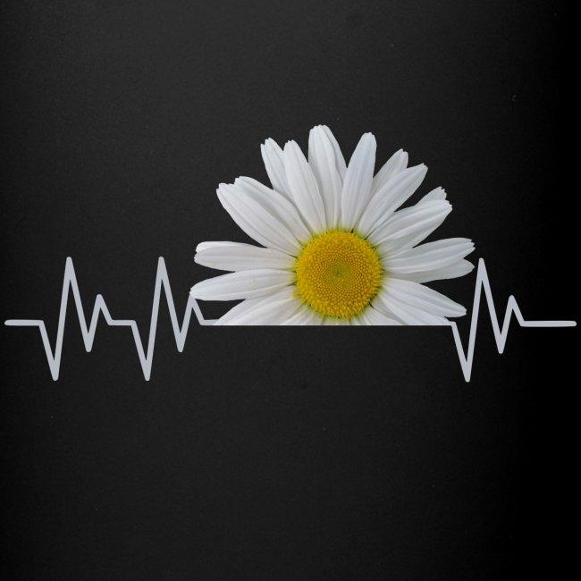 Margerite, Herzschlag, Gänseblümchen, Pulsschlag