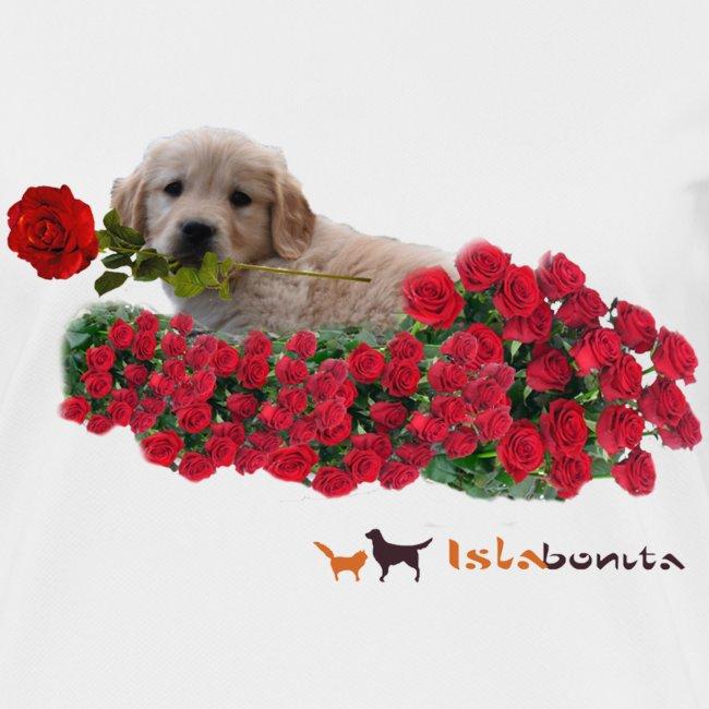 Cucciolo Golden Retriever con Rosa in Bocca