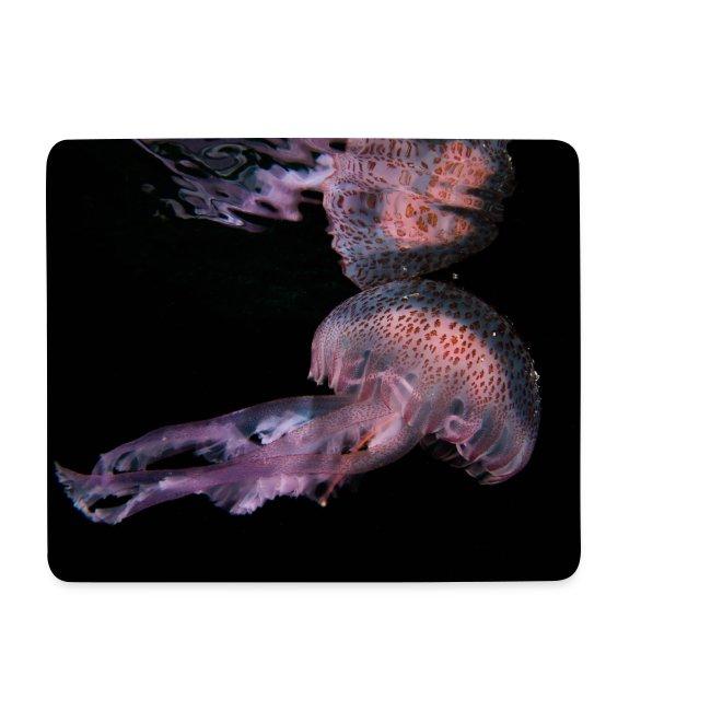 Reflet de méduse