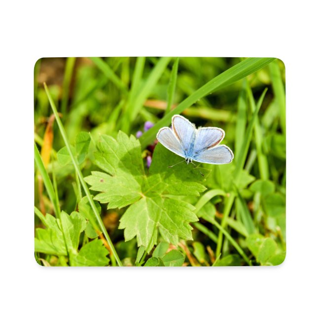 Blue Butterfly by EmilyLife®