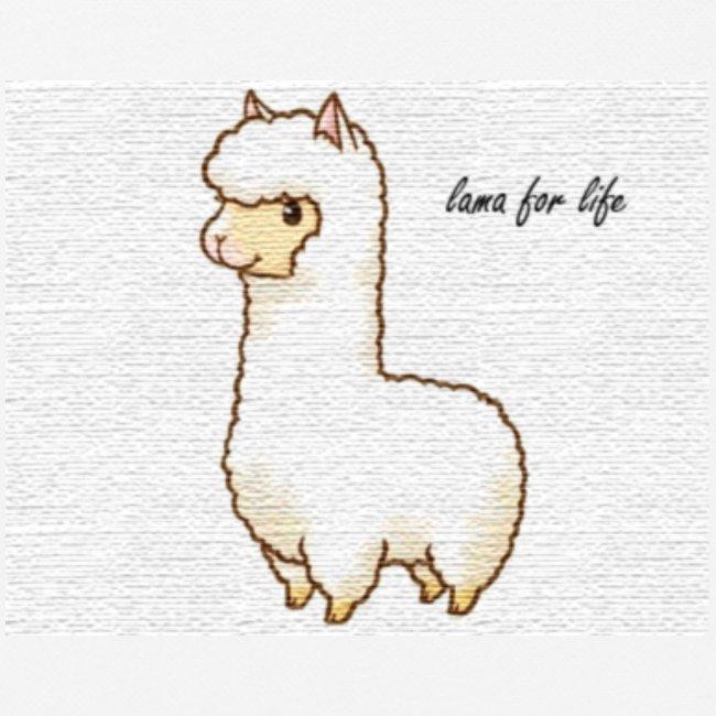 lama / alpaca