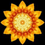 ARTflower 15