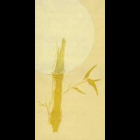 Bambus im Morgenrot