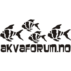 Akvaforumlogo m fisk flock