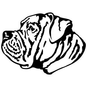 1 American Bulldog
