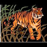 brun_tiger_2.png