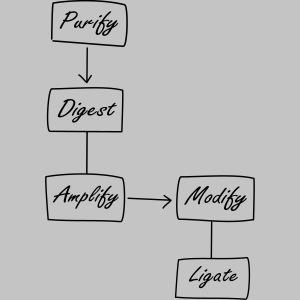 Molecular Biology Protocol