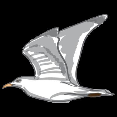 möwe - Das inoffizielle Wahrzeichen Rostocks ist mit Wahrscheinlichkeit die Möwe. - derMausmeister,Rostock,Ostsee,Möwe,Meer,Luft,Geschrei,Fliegen,Fisch