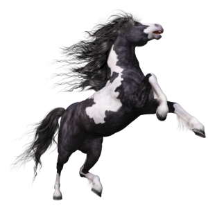 Schwarz weißes Pferd