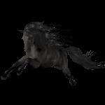 Schwarzer Hengst
