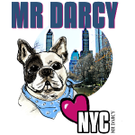 MR DARCY LOVES NYC