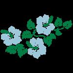 Hibiskusblüten 2 3farbig
