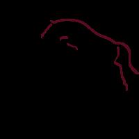 Pferde Dressur / Springen