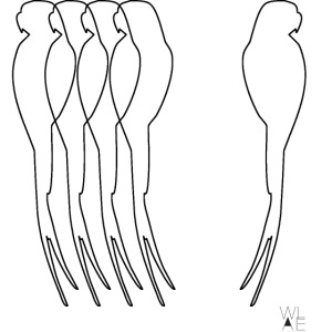 Parrot B