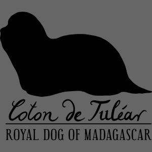 Coton de Tuléar