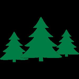 Tannenbaum, Gruppe
