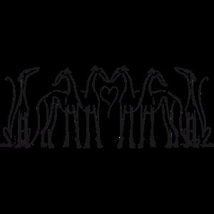 Windhund Gruppe