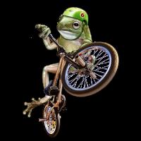 frog bmx