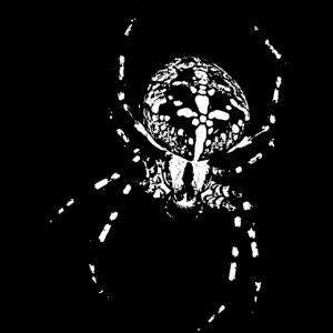 Kreuzspinne Spinne Spinnen gruselig Tier Halloween