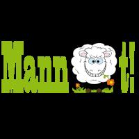 Mannschaft - Schaf