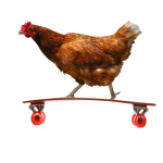 Ckicken on Longboard