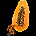 papaya2_logo.png