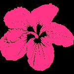 Hibiscus TROPIKAL 3