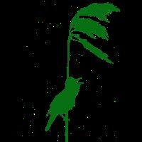 Schilfrohrsänger grün