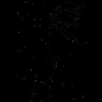 Schilfrohrsänger
