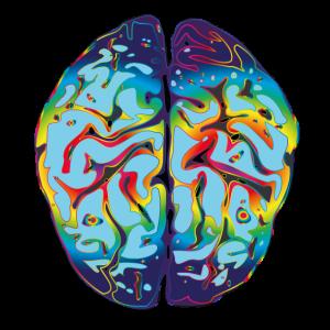LSD Gehirn