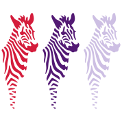 three zebras (b)