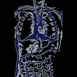 Anatomie / menschlicher Körper / Organe