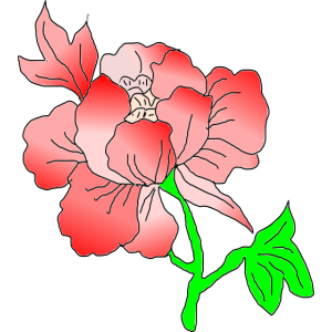 Blume_red