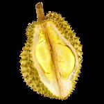 durian2_logo.png