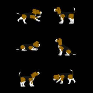 Beagle Auswahl