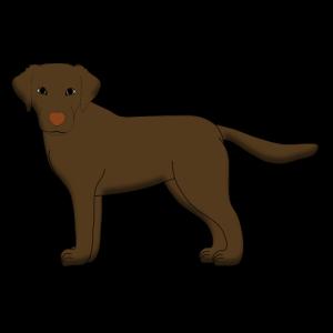 Labrador vorn braun