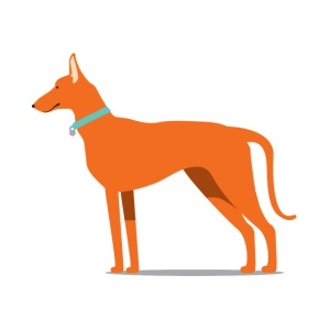 podenco.png